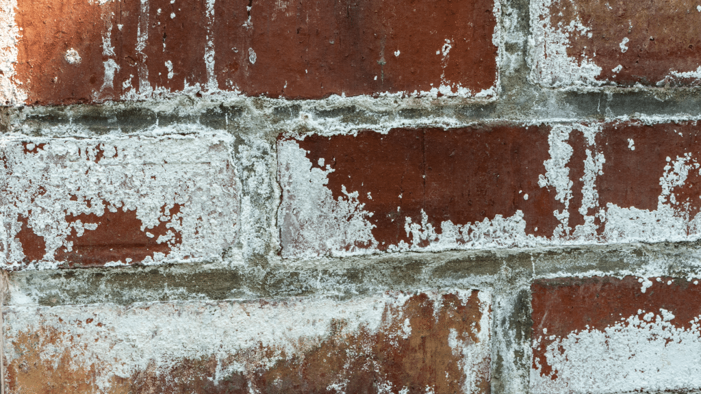Efflorescence on the wall