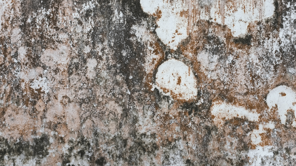a build-up of white minerals on the wall