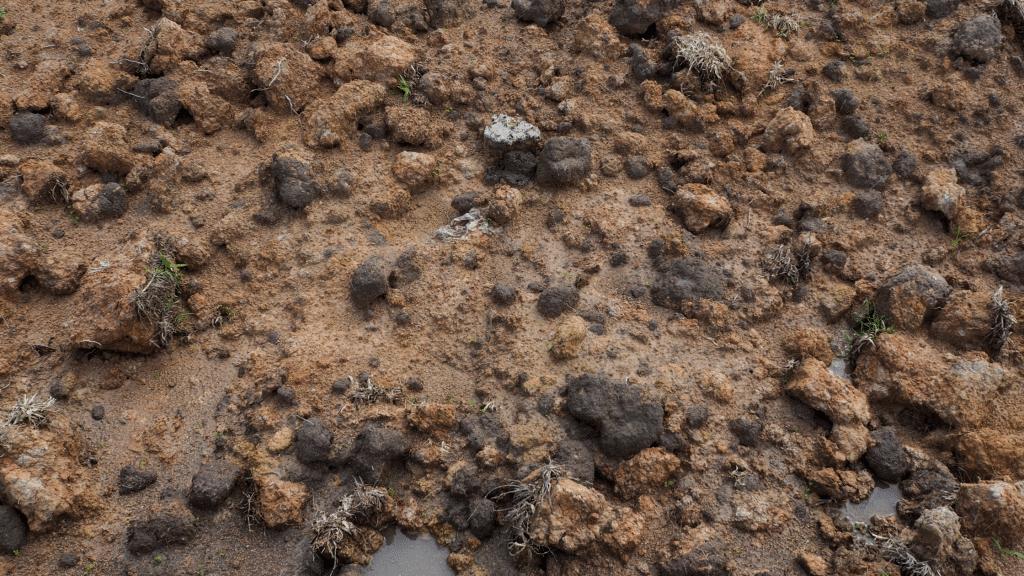 clay-rich soil
