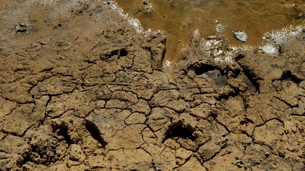 earth absorbed with water