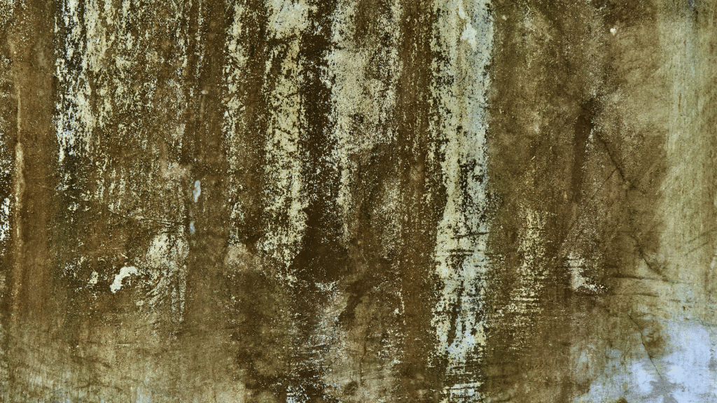 efflorescence on the walls