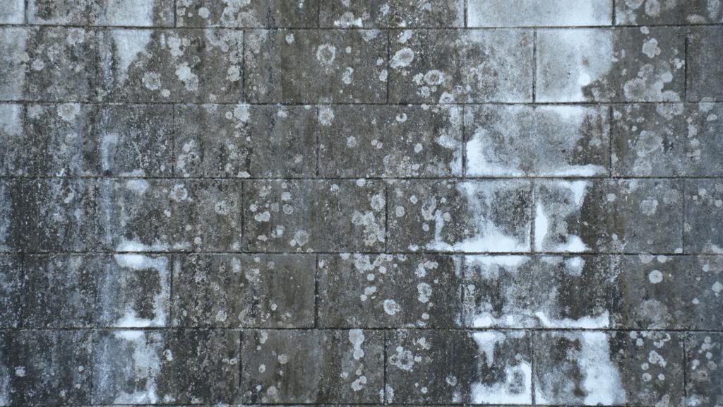 efflorescence on walls