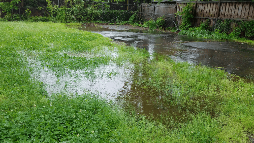 lawn with puddles