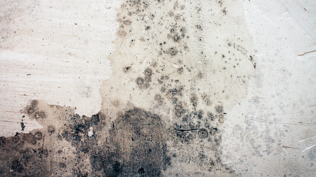 mold growth in the basement