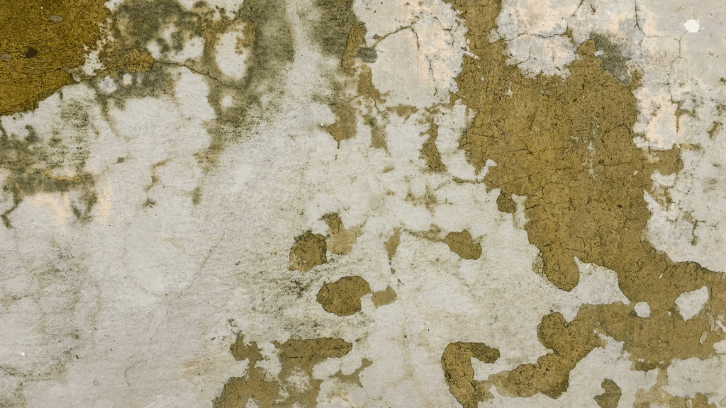 mold growth on the foundation walls