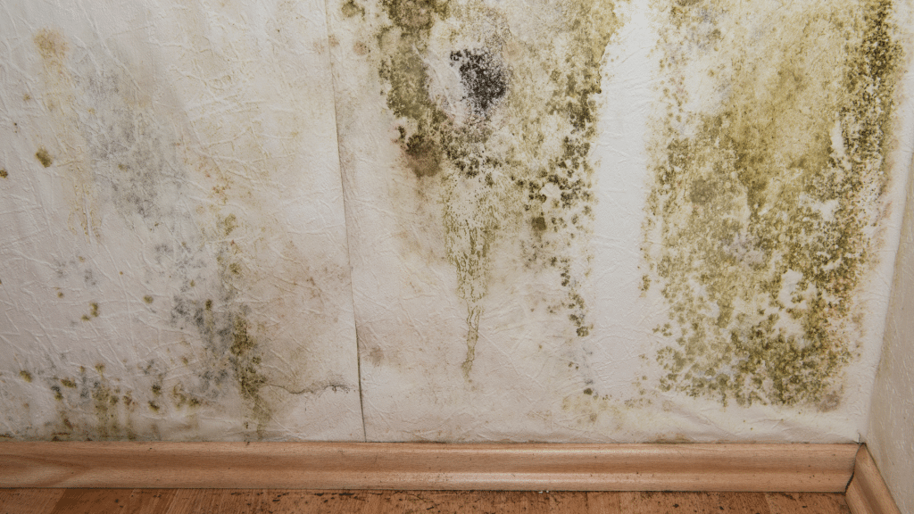 mold growth on the wall