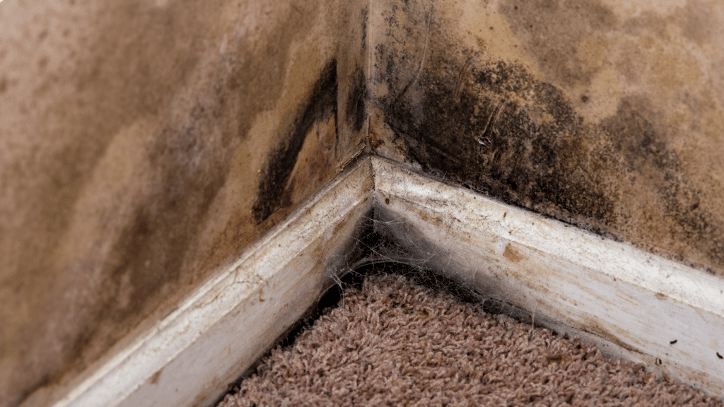 mold in the corner of the basement