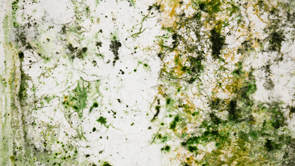 mold in the under the home area