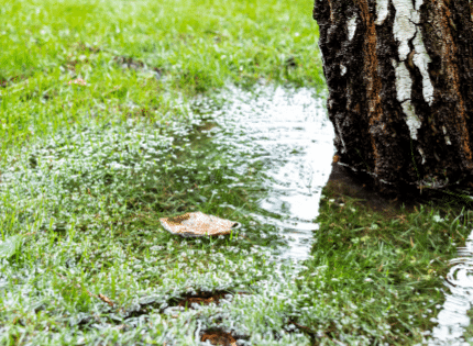 puddle of water around the tree