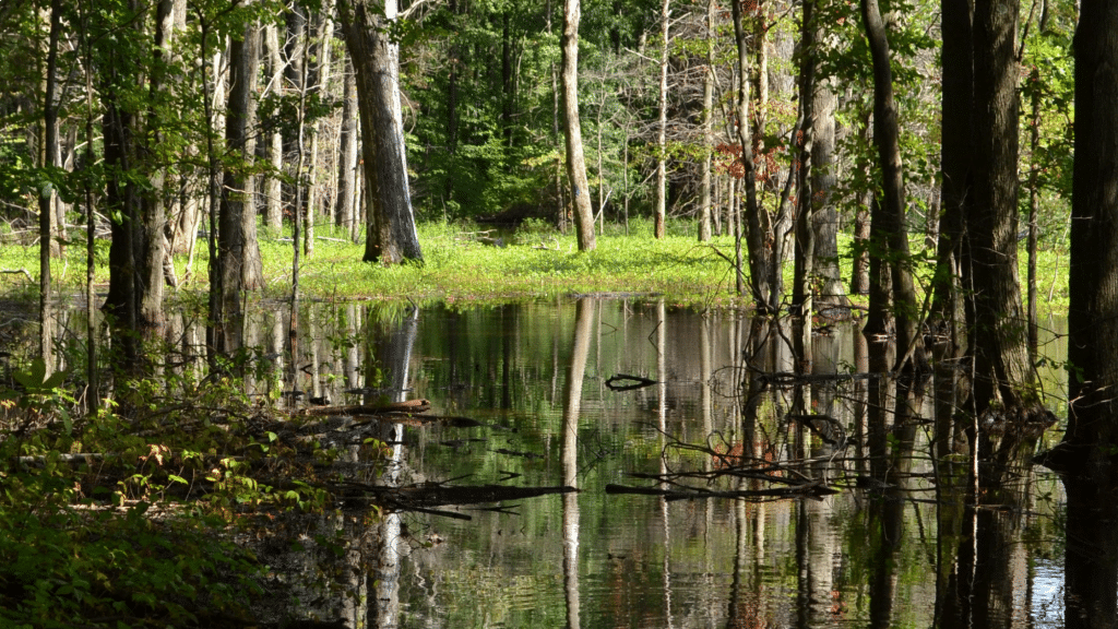 puddle of water in the park