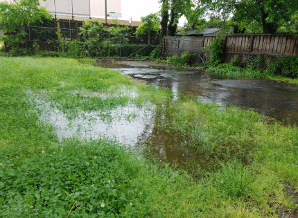 puddles in the yard
