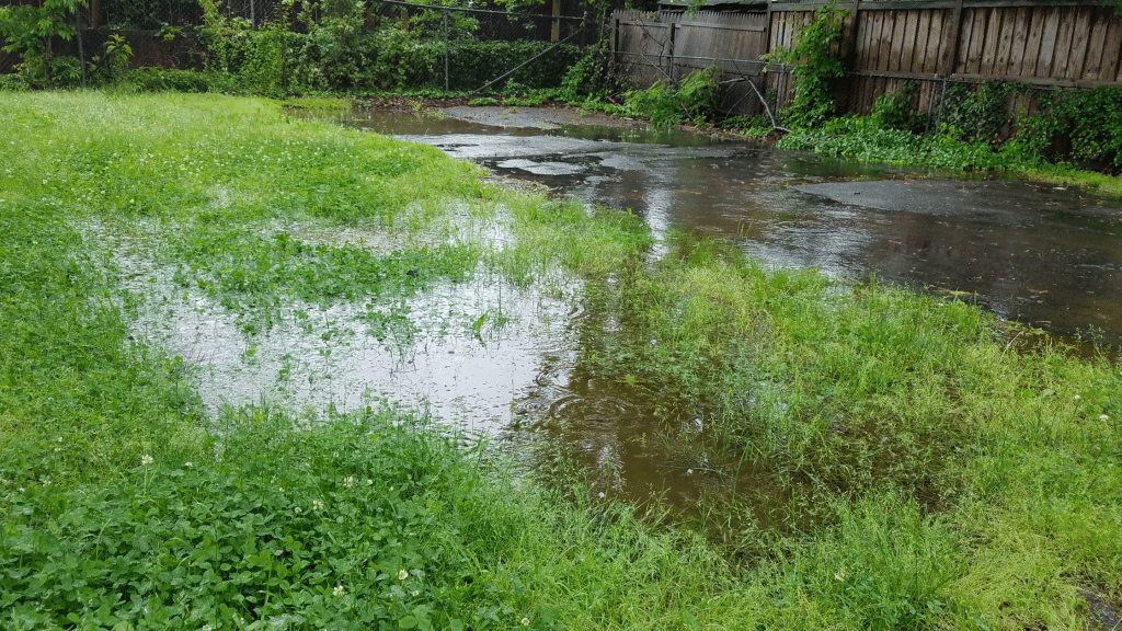 puddles on the lawn
