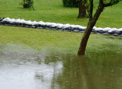 the garden flooded by water