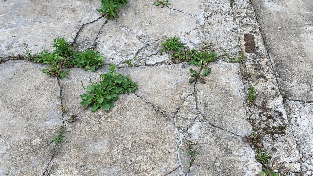 uneven floor cracks
