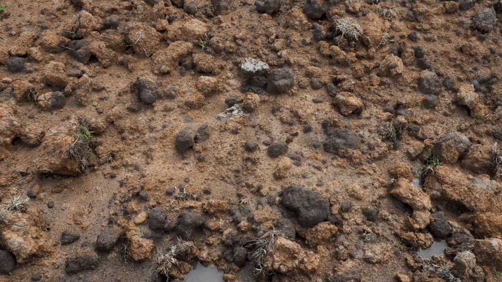 wet soil