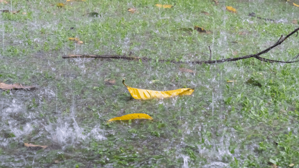 yellow leaves and a branch on the ground with a heavy rainfall
