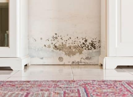 moisture and mold on the wall